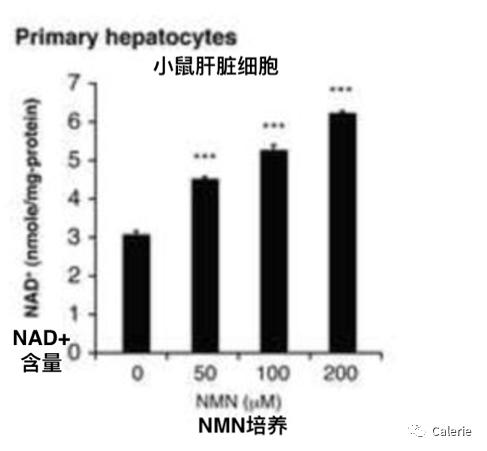 NMN与肝脏健康插图1